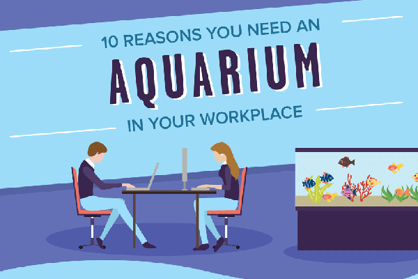 [Infographic] Should You Have an Aquarium in Your Office?