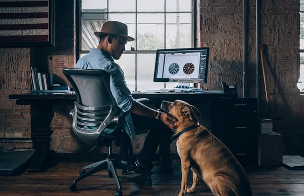 How Pets Can Raise Productivity in The Office