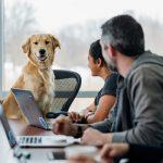 将宠物带到工作场所的好处