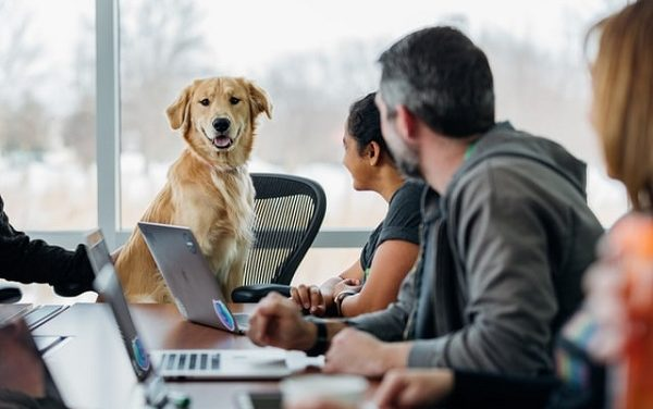 Benefits of bringing Pets to Workplaces